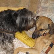 Couchgeflüster (Bart und Athena)