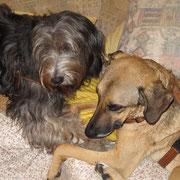Bart und Athena gönnen sich ein Schmusestündchen auf der Couch.
