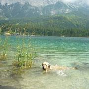 Chico lernt im Eibsee schwimmen