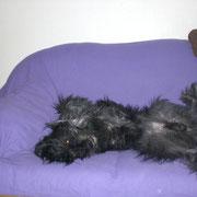 Astan in seiner lieblings Schlafposition