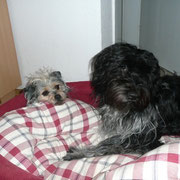 Komm unter meine Decke... (Luke und Paris)