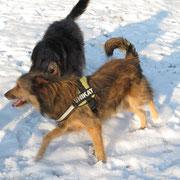 Moritz und Bart toben durch den Schnee.