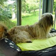 Chico liebt seinen Ausblick ins Grüne