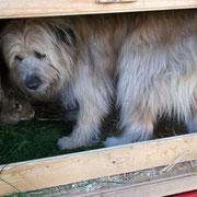 Leo ist am Liebsten im Stall bei 'seinen' Häschen