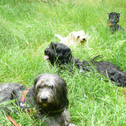 Auf der Liegewiese (Bart, Luke,Hopi und Emma)