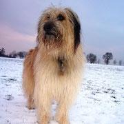 Chico: Hurra, endlich Schnee!
