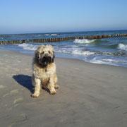 Bacio genießt seinen Urlaub