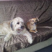 Kira und unsere ehemalige Pflegehundedame Rosarito