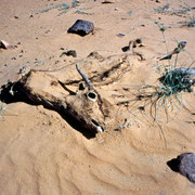 live and death is close in the desert