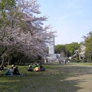 花見 桜 サクラ 千葉公園 4