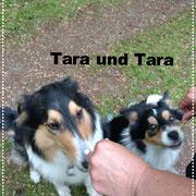 Tara in Hiesfeld kennengelernt.
