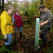 Pflanzaktion in den Auwaldbereichen zum 'Baum des Jahres 2019' - der Flatterulme.