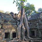 "Kambodscha, im ""Dschungeltempel"" in Angkor Wat"