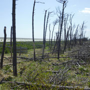 102 左側から海岸護岸、松枯れ対策の植樹、松枯れの様子