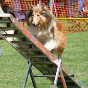 Meggy im A-Lauf am Samstag, 14.08.2010 ATC Dompokal