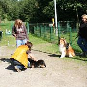Treffen auf unserem Hundeplatz