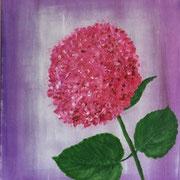 Hortensie Pink-Annabelle, 40x50 cm