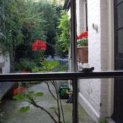Jardin de la maison.