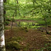 Forêt à Invermoriston