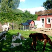 Familienhunde Elo in Rau