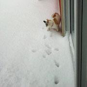 ich bin ne Katze, hol mich hier rauuuusss!!!