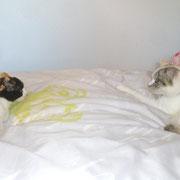 Ouh, Sisha ist noch nicht erfreut über Annikas junge Katze Luna.