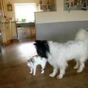Pookies Schwester Philina-Lilly ist zu Besuch