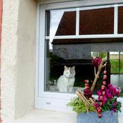 Cooles Foto: Sisha sitzt innen auf der Fensterbank. Durch die Scheibe spiegelt sich sowohl der Schuppen, der hinter mit als Fotograf steht, als auch die Wohnzimmer-Glastüren Richtung Terrasse.