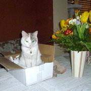 Wir haben Hochzeitstag, Katze sitzt mal wieder im Karton :-)