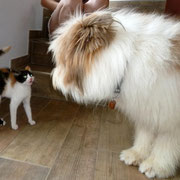 Luna und ihre erste Hundebegegnung.