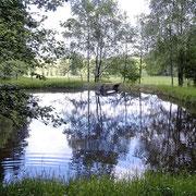 Angelgewässer des Franzenhof