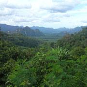 Khao Sok Jungle