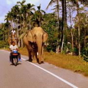 Un éléphant sur la route