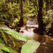 Rivière dans la jungle