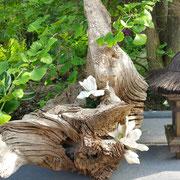 Dekorative Holzwurzel mit Laterne - Susannes Idee
