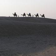 Weglos durch die Wüsten Indiens.