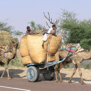 Auch Kamelkarren sind unterwegs, besonders wie hier im Unionsstaat Rajastan.