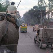 Dagegen sind Elefanten selten geworden im Strassenverkehr.
