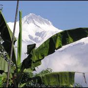 Tropische Vegetation, dahinter ewiges Eis.