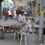 Auf den Dörfern oder in Kleinstädten Indiens sind Eselkarren nichts seltenes.
