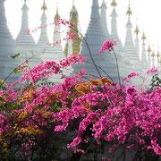 Tropische Farben vor den weissen Stupas einer Tempelanlage.
