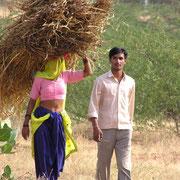 Typische Lastenverteilung in Indien - die Rolle der Frau - im Gesicht verschleiert sonst aber bauchfrei.