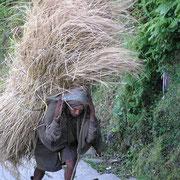 Hier sind wir in Nepal. In den Bergregionen gibt es meist keine Alternative zum tragen.