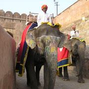 Die Rolle der Elefanten als Arbeits- oder Transporttier geht immer mehr zurück.