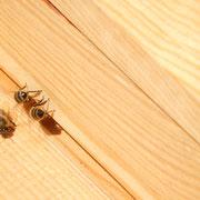 Bienen auf dem Flugbrett