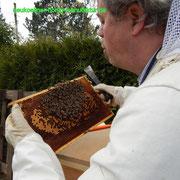 Bienen Kontrolle Stock 1