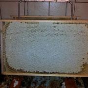 Eine verdeckelter Rahmen voller leckerem Honig!