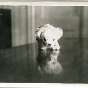 ref.S87 -  9x12,5cm - circa 1940 - 5/5