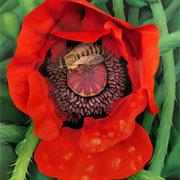 blühend, Ölfarbe auf LW,  80 x 60 cm
