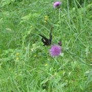 ❀ 蝶: キリスト教ではチョウは復活の象徴とされ、ギリシャではチョウは魂や不死の象徴とされます。